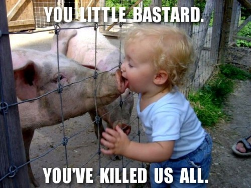 1314-this-little-bastard-killed-us-all-swine-flu-500×375.jpg