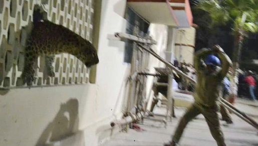 A leopard attack in Meerut, India from 2014.