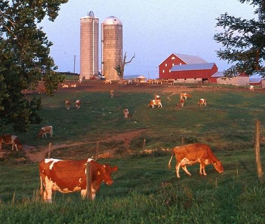 A peaceful, deadly dairy farm.