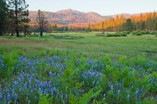 ackerson-meadow