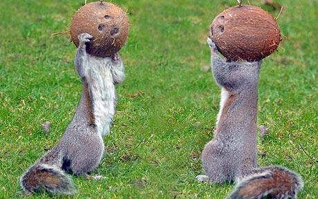 astro-squirrels.jpg