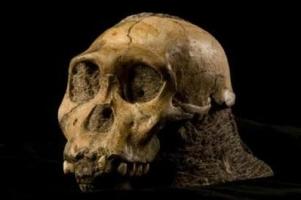 australopithecus-sediba.jpg