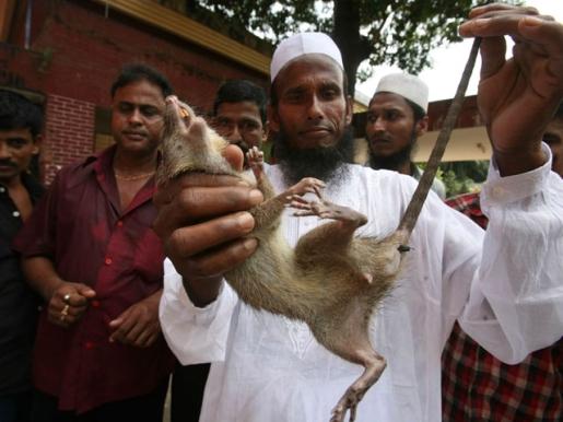 bangladeshi-rat-killer.JPG