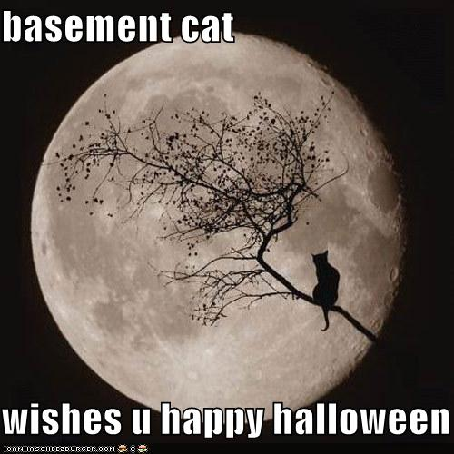 basement-cat.jpg