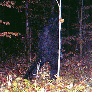 bigfoot-surveillance.jpg