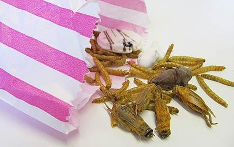 candy-insects.jpg