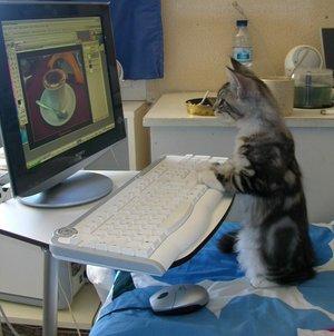 catpc.jpg