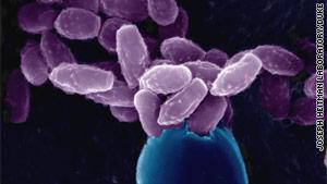 cgattii-fungus.jpg