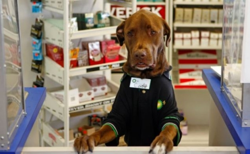 cody-shop-worker-dog.jpg