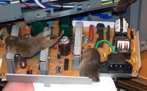 computer_infested_with_mice.jpg