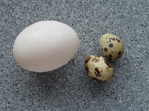 cross-egg.jpg
