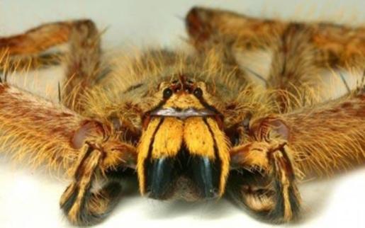 david-bowie-spider.jpg
