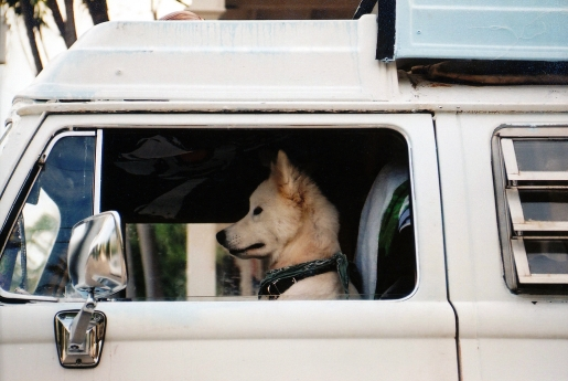 dog-driving-car.jpg