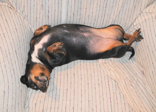 dog-in-recliner.jpg