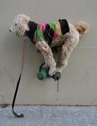 dog-in-sweater.jpg