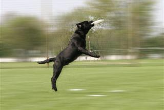 dogfrisbee.JPG