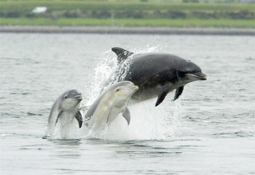 dolphin-rescue.jpg