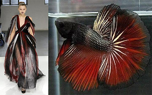 Siamese fighting fish fashion 2