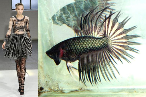 Siamese fighting fish fashion 4