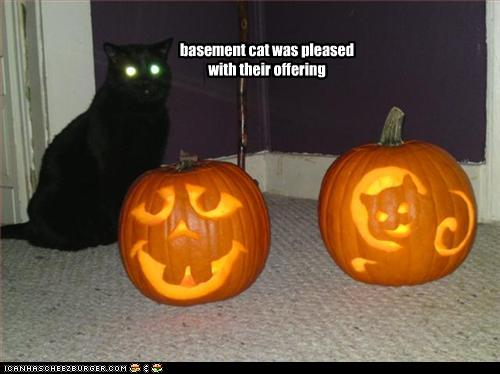 funny-pictures-basement-cat-is-pleased-with-offering.jpg