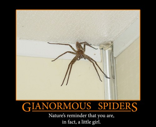 gianormous-spiders-500×409.jpg