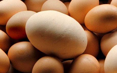 giant-egg.jpg