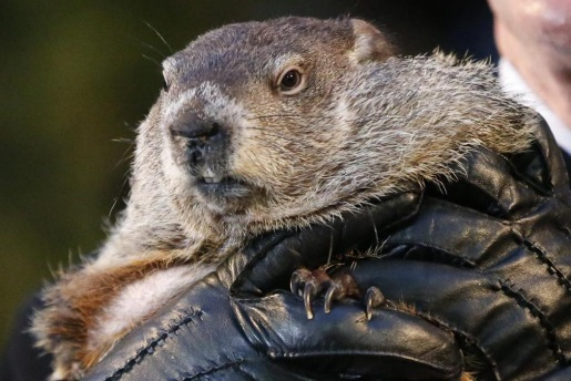 groundhog-phil