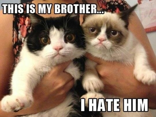 Grumpy Cat will be a movie star. No word about her equally-cute brother.