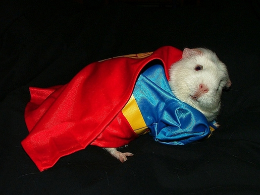 guinea-pig-costume.jpg