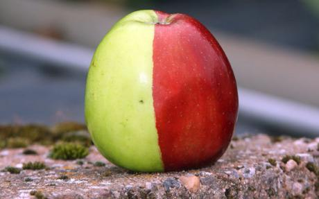 half-red-half-green-apple.jpg