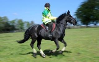 horse_ambulance.jpg