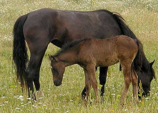horses-for-food.jpg