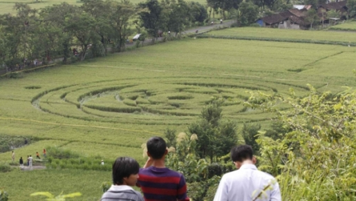 Indonesia Crop Circle. When crop circles were