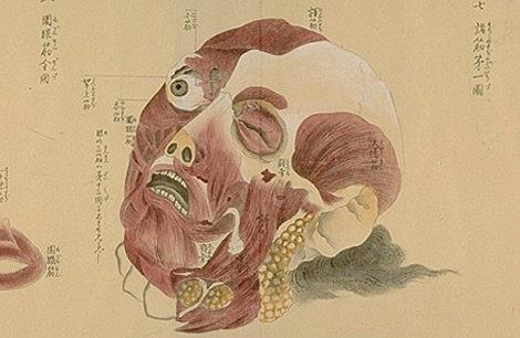 Japanese anatomy 1