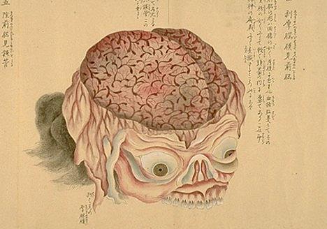 Japanese anatomy 2