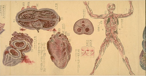 Japanese anatomy 3