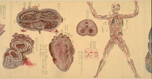 Japanese anatomy 3