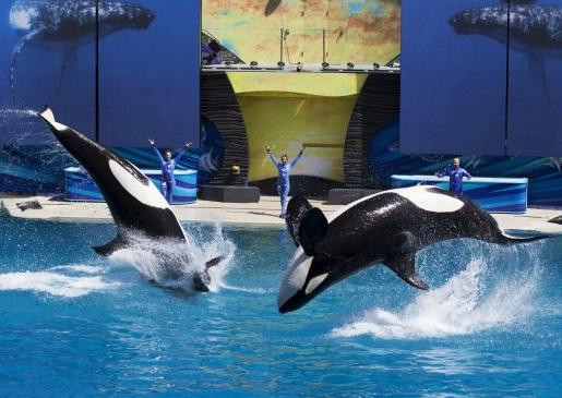 killer-whale-show