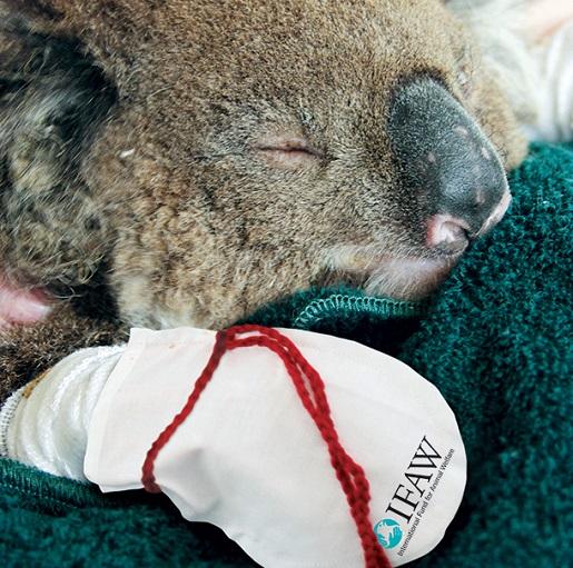 koala-mitten
