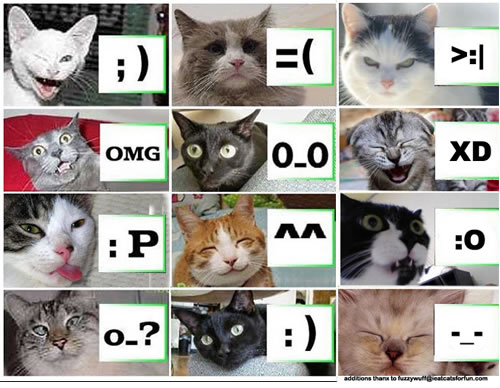 lolcat-emoticon.jpg