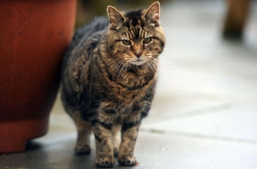 http://www.popfi.com/wp-content/uploads/lucy-39-year-old-cat.jpg