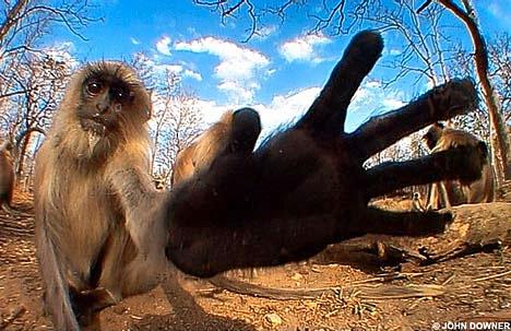 monkey-hand.jpg