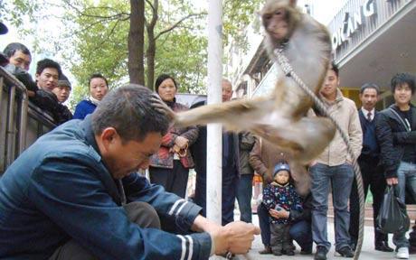 monkey-karate.jpg