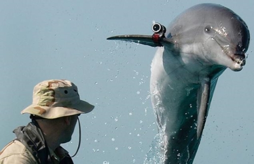 "Combat dolphins on the loose, filming for ""Dolphins Gone Wild""."
