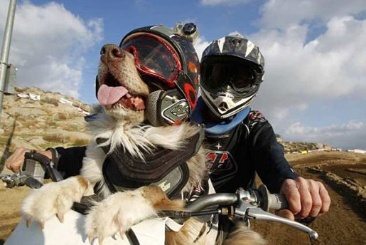 opee-motocross-dog.jpg