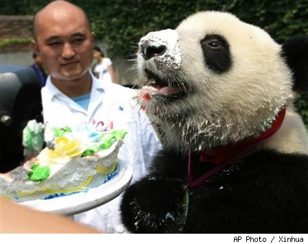 panda_eating_cake.jpg