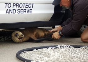 sea-lion-pup.jpg