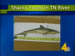 sharks-found-in-tennessee.jpg