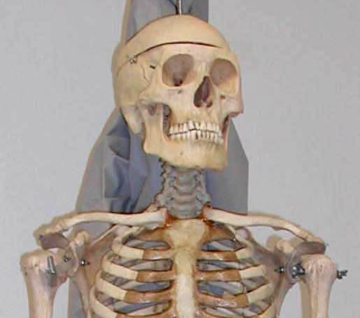 real human skeleton sold at yard sale » popular fidelity » unusual, Skeleton