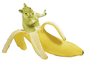 banana squirrel